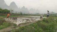 Ricegrowing Jiuxiancun
